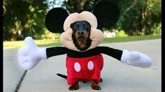 daushand as mickey mouse - YouTube