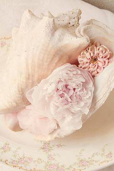 Seashells et fleurs