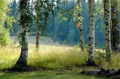 Elokuun eloa, Finnish Summer Beautiful World, Beautiful Places, Finland Summer, Midnight Summer, Victorian Paintings, Ghost In The Machine, Summer Story, Summer Memories, Summer Dream