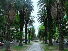 Ciudad de Rosario - Santa Fe Best Cities, South America, Places Ive Been, Sidewalk, Country, Travel, Argentina, Crib, Urban Landscape