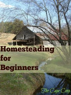 Homesteading for Beginners - The Cape Coop