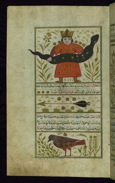 Serpentarius (Ḥawwā), Sagitta (kawkab al-sahm), and Aquila (al-ʿuqāb), The Walters Art Museum, Ms. W.659, Turkish version of the Wonders of creation, fol. 20a http://www.thedigitalwalters.org/Data/WaltersManuscripts/html/W659/description.html