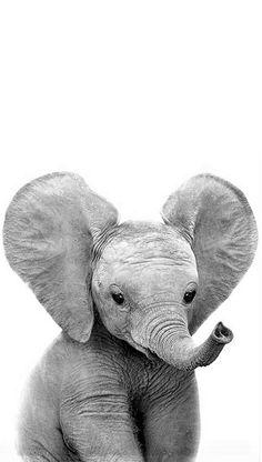 Baby Elephant Tattoo, Elephant Love, Happy Animals, Animals And Pets, Dumbo Movie, Baby Animals Pictures, Diy Canvas, Creative Art, Amazing Art
