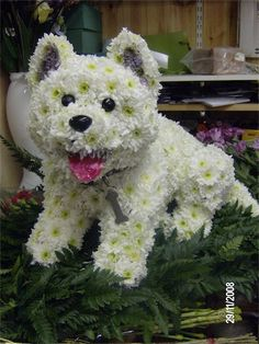 dog gallery « Val Spicer