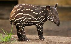 Les plus beaux bébés animaux du monde - Linternaute