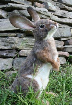 OOAK Nadel Filz Alpaka Size Cottontail Bunny Hase Hase von SteviT