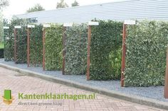 Blog - Kant en klaar haag showroom | Green-lab.nl