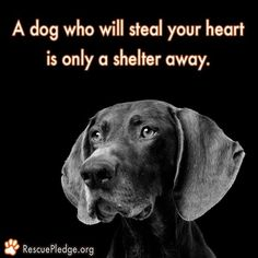 Please always adopt, rescue, foster from a Shelter or Rescue