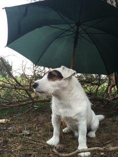 Still raining...