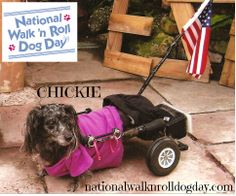 Such a cutie we are featuring as our cover model this week at facebook.com/nationalwalknrolldogday