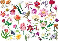 Various Flowers Vector Image Set