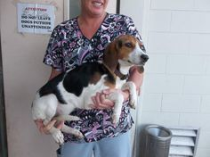 2 BEAGLE SISTERS NEEDS ADOPT/FOSTER/RESCUE NOW....EUTH LISTED.....PLEASE SHARE....   http://www.lakecountyfl.gov/departments/conservation_and_compliance/animal_services/index.aspx