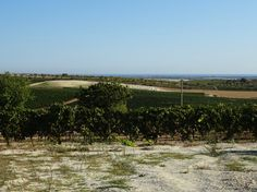 Blick in Richtung Meer von dem Weingut La Favola - #Sizilien
