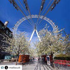 #Repost @mattscutt Springtime at the London Eye  #cocacolalondoneye #LondonEye #spring #london #instagood #southbank #southbanklondon #mysouthbank by southbank.london