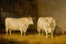 Thomas Sidney Cooper Paintings for Sale | Thomas Sidney Cooper Art Value Price Guide Value In Art, Farm Yard, Paintings For Sale, Cattle, Oil On Canvas, 19th Century, Modern Art, Cow