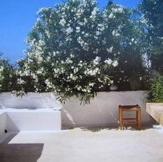 A terrace of Nerium Oleander in Patmos, Greece — via @simplicitycity
