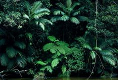 Imagem de green, nature, and forest