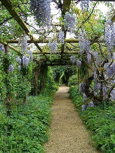 Rousham House Garden, wisteria trellis.