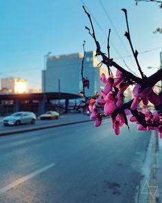 Καλημέρα καλό Σαββατοκύριακο και #μένουμε_σπίτι για εμάς για αυτούς που αγαπούμε για τους τριγύρω μας. Athens, Athens Greece