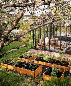 Garden Boxes, Edible Flowers, Vineyard, Planters, Layout, Outdoor Structures, Classic, Inspiration, Instagram