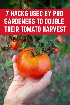 7 Hacks Used By Prize Winning Gardeners To Double Their Tomato Harvest – Gardening for beginners and gardening ideas tips kids Backyard Vegetable Gardens, Veg Garden, Tomato Garden, Vegetable Garden Design, Edible Garden, Lawn And Garden, Garden Picnic, Potager Garden, Garden Club