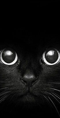 A great picture of a black cat http://www.verycoolphotoblog.com/