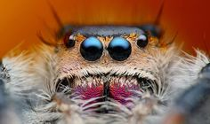 Jumping Spider Macro Photo on Shutterstock Micro Photography, Animal Photography, Wildlife Photography, Spider Face, Jumping Spider, Base Jumping, World Birds, A Bug's Life, Wild Life