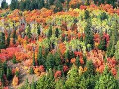 Autumn in the northwest US - Google Search