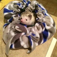 Revised No-sew hedgie pouch!