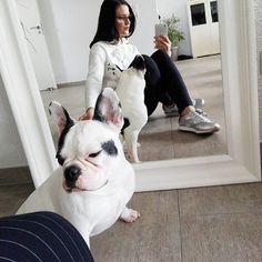 Good Morning peeps and Frenchies <3 #frenchie #frenchbulldog #bulldog #buldocek #buldoguefrancês #cute #dog #blackandwhite #fashion #fashionista #metoday #lookoftheday #look #lookbook #outfitoftheday #outfit #outfitinspiration #outfitinspo #brunette #opus #casuallook #casual #like4like #dnesnosim #dnesnioutfit #instafashion #ootd