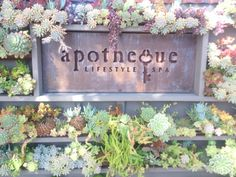 Apotheque Spa, great place for a massage