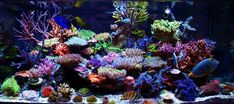 absolutely amazing sps dominated tank. Probably the best I have seen http://reefkeeping.com/joomla/images/stories/totm/Dec12/FTSlg.jpg