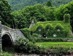 Ivy covered cottage heaven