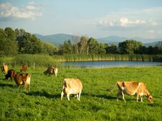 Webb Family Farm in Fairfield County, Vermont (the Webbs are first generation dairy farmers!)