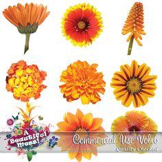 Flowers CU Vol6