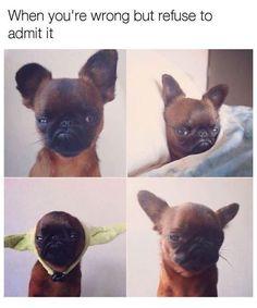Funny Dog Memes – 50 Pics #funnydogs