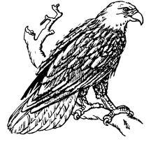 Eagle coloring pages 6 | Eagle Coloring Pages | Pinterest | Eagle ...