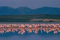 FUENTE DE PIEDRA: lagos y lagunas naturales