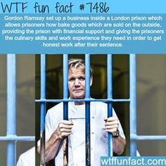 How Gordon Ramsay is helping London prison inmates - FACTS Wow Facts, Wtf Fun Facts, Random Facts, Crazy Facts, Funny Facts, Random Stuff, The More You Know, Did You Know, Tori Tori