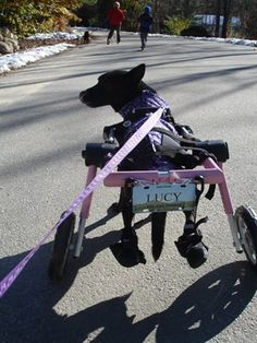PetsMatter | Defying the odds: Inspiring specially abled pets