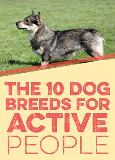 The 10 Dog Breeds For Active People