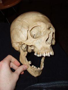 Skull 6 by Al-Dorn-Stock