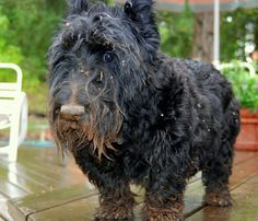 """""""I Am Not Covered in Mud. It's My New Hair Colour"""" - 14 Dogs That Aren't Any Good at Lying"""