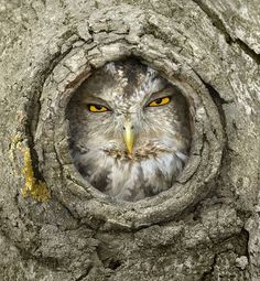 "Owl ""You rang?"""