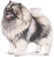 Keeshond is my fav kind of dog ppl Akc Dog Breeds, Spitz Dogs, Dog Insurance, Kinds Of Dogs, Dog Boarding, Dogs And Puppies, Doggies, Rescue Dogs, I Love Dogs