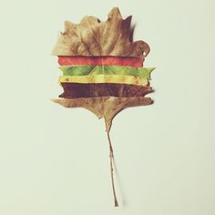 Happy autumn, courtesy of Brock Davis and his cheeseburger tree.