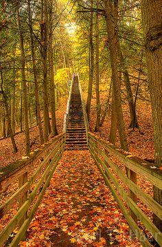 Forest Stairs, Michigan  photo via ephemerx