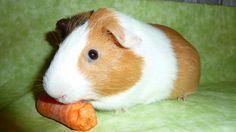 Jimmy Rabbit, Teen, Animals, Bunny, Rabbits, Animales, Animaux, Bunnies, Animal