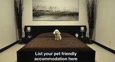 Pet friendly accommodation in WA Pet Friendly Accommodation, Going On Holiday, Western Australia, Your Pet, Westerns, Places To Go, Pets, Painting, Animals And Pets