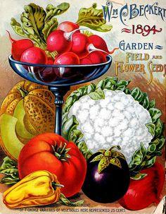 Wm. C. Beckett Garden, Field & Flower Seeds for Spring & Summer 1894 (back cover)